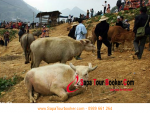TOUR SAPA TO VISIT BUFFALO MARKET